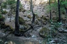 Petalodues- Dolina Motyli
