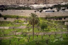 JEROZOLIMA- Dolina Cedronu