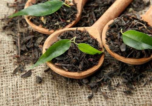 compoziția ceaiului mănăstirii în varicoză