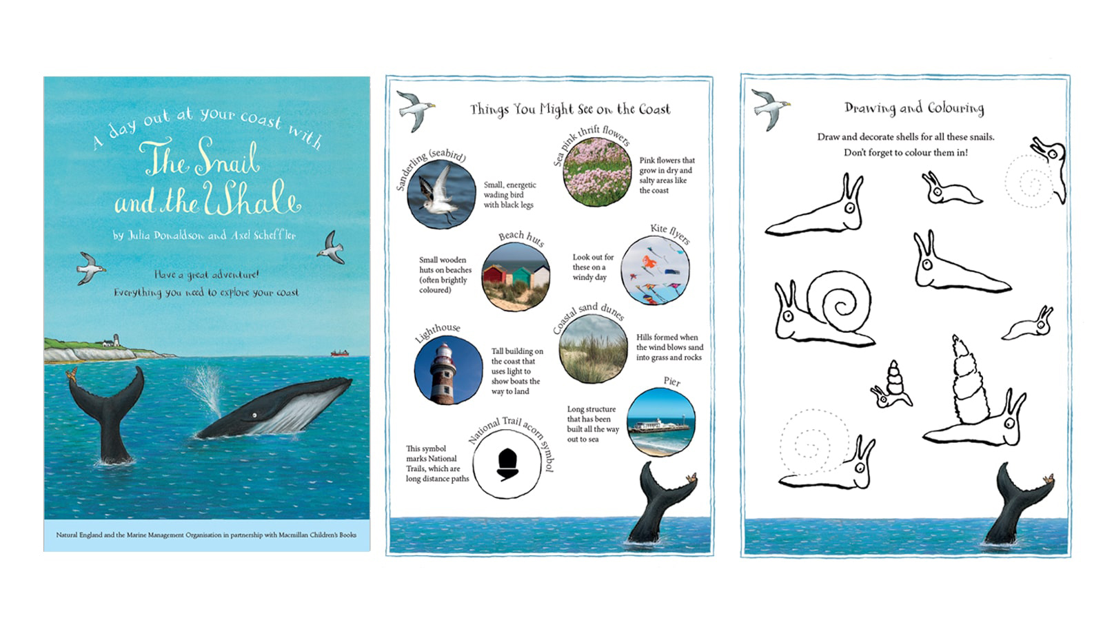 Have A Coastal Adventure With The Snail And The Whale