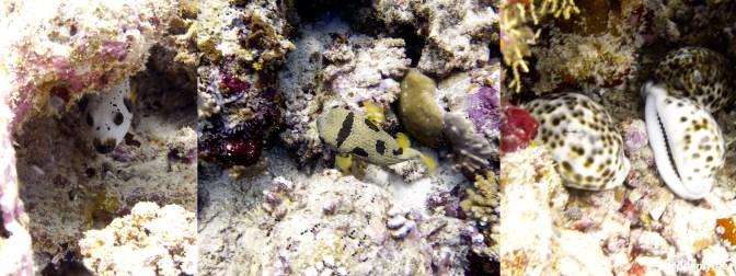 Dive Maldives