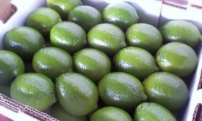 Foto: tala.olx.com.mx