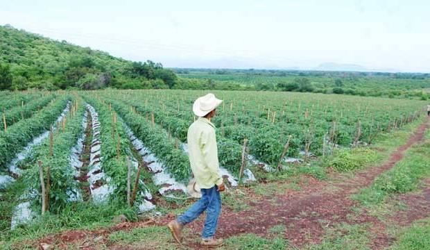 campo michoacan