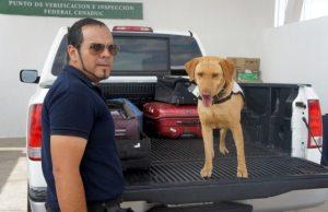 inspeccion canina