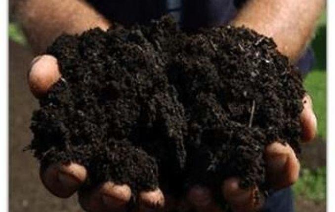 Bio fertilizante