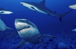 bolsa_tiburones