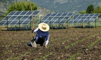 agricultura-forestal-renova