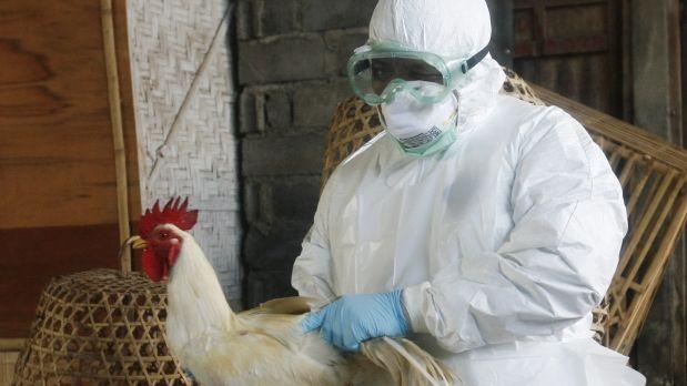 vacunación contra gripe aviar