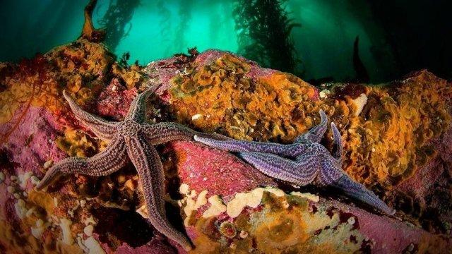 El Ministerio de Ambiente y la National Geographic registran la biodiversidad oceánica en la Patagonia