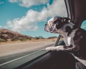 Mascotas al poder: en 2020 los argentinos van a priorizar viajar junto a sus amigos de cuatro patas