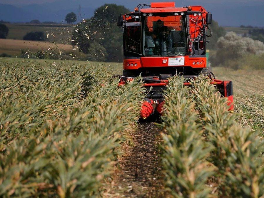 Más del 90% de la superficie sembrada con maíz en Entre Ríos presenta óptimas condiciones