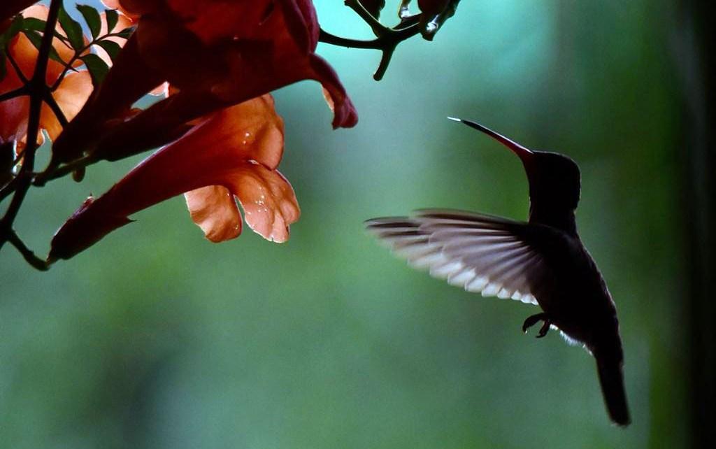 conteo de aves