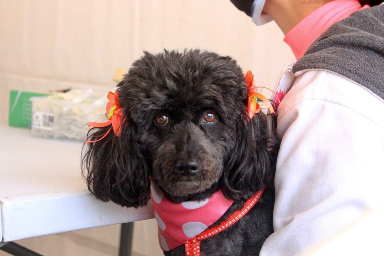 Empiezan jornadas de vacunación de mascotas contra la rabia canina y felina. 1