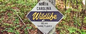 Bears in Panthertown