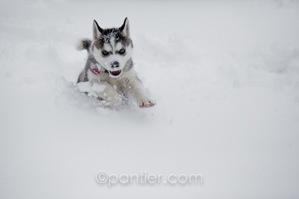 20120203 0203 Snowday 56