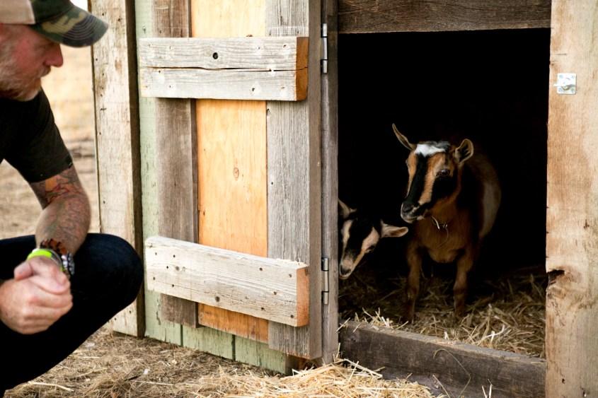 0926 goats-004