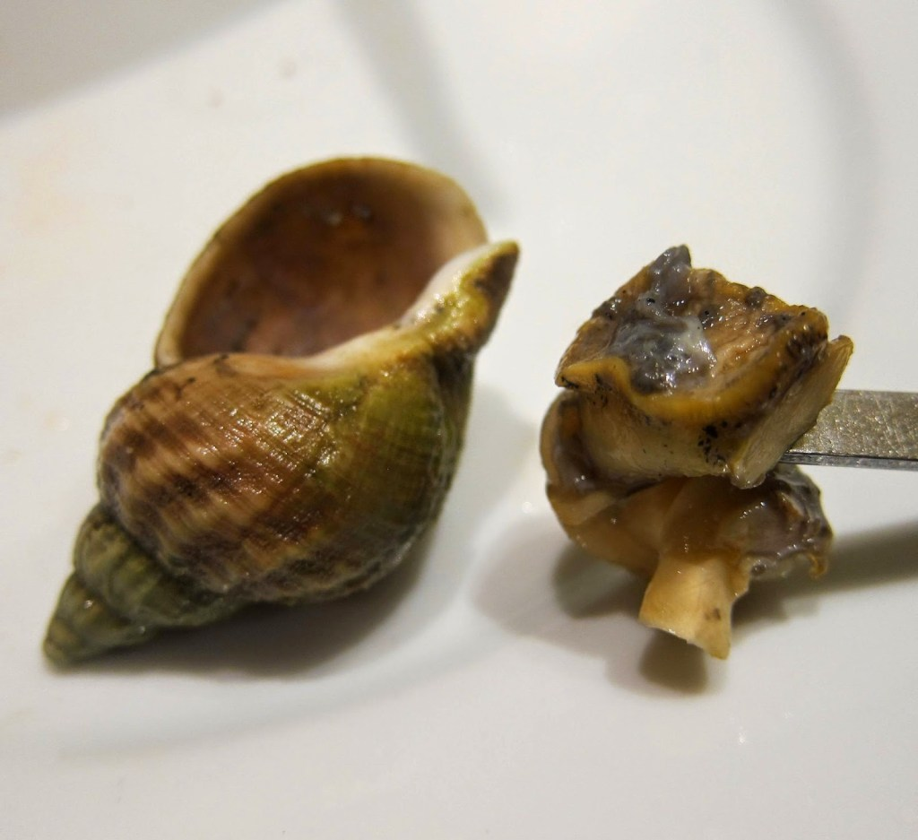 A cockle