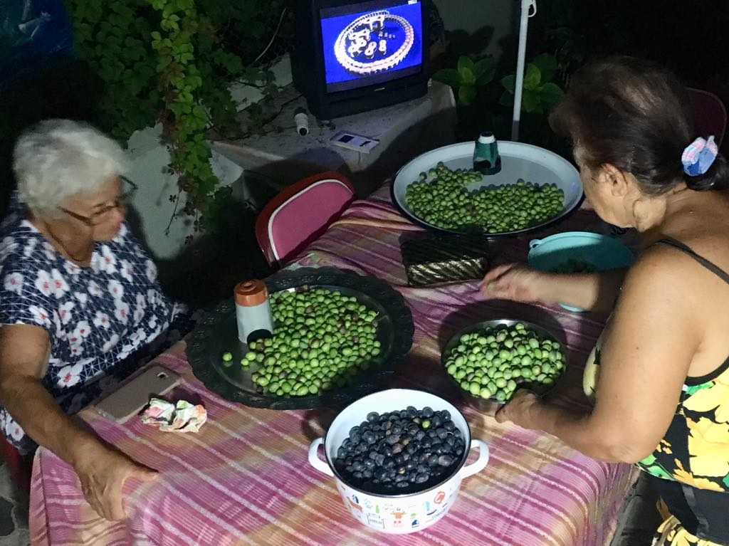 Olive Picking Bes Cay
