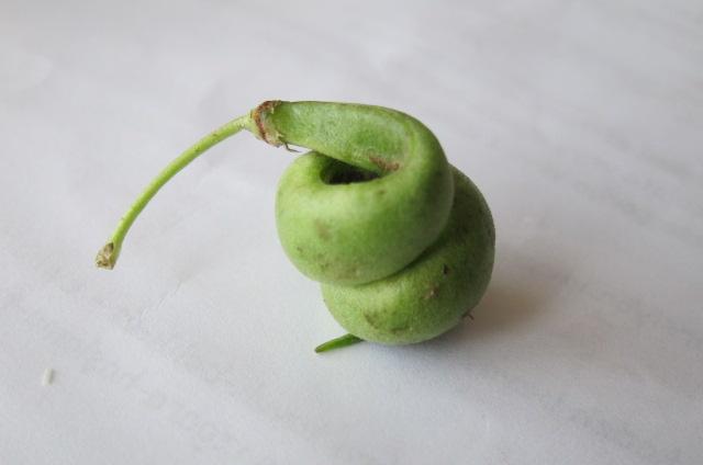 green bean aberration