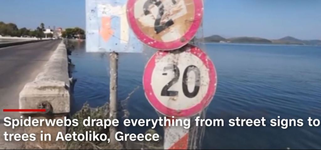 spiderwebs in Greece