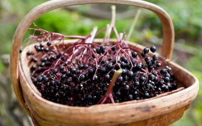 The Power of Prevention: Elderberry Etc…