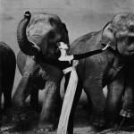 avedon dovima con elefanti