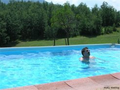 Wolly in piscina