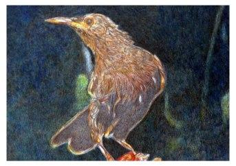 Pájaro. 2010