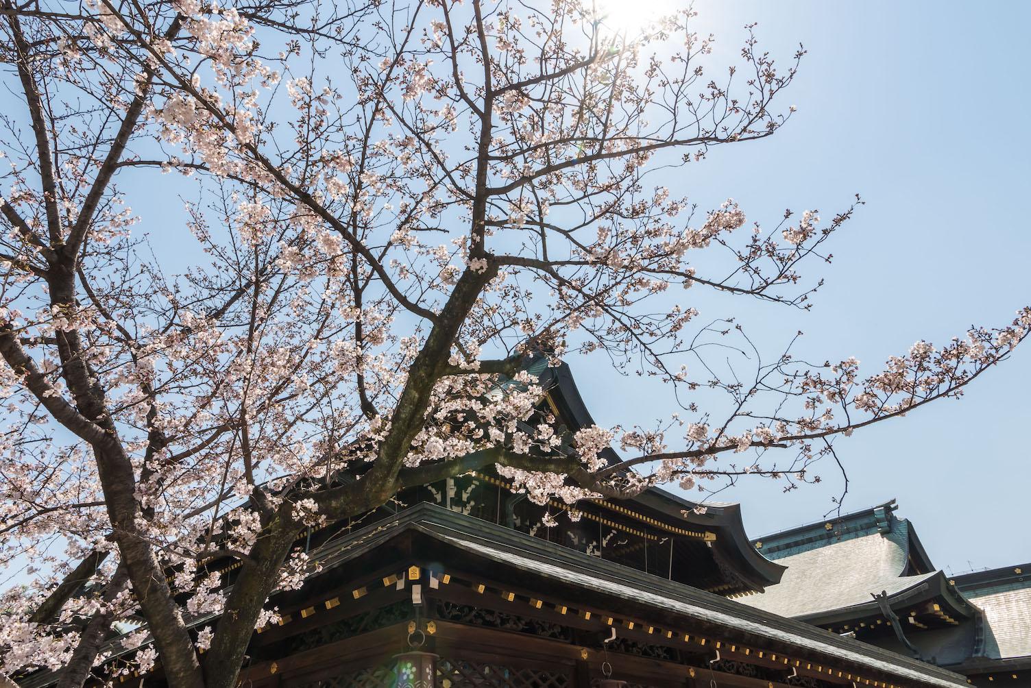 大阪天満宮と桜の花