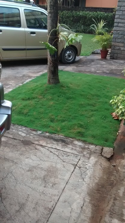 The Mexican lawn