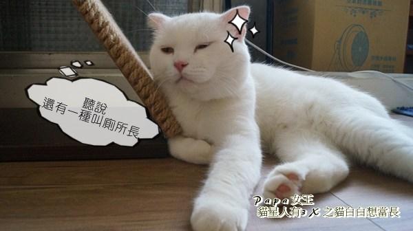 廁所長貓白白