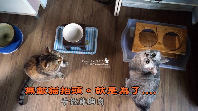 手做貓肉乾
