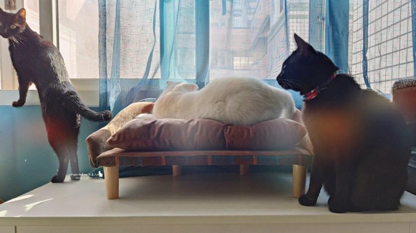 Allando奧蘭多 貓飼料