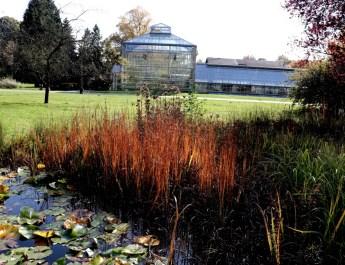 Gewächshäuser in der Botanischen Anlage