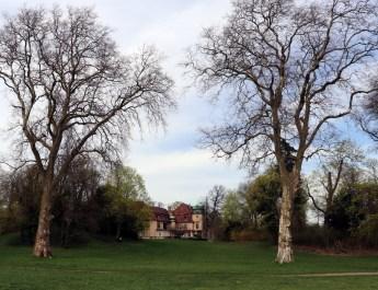 Alte Pappel im Schlosspark Marquardt