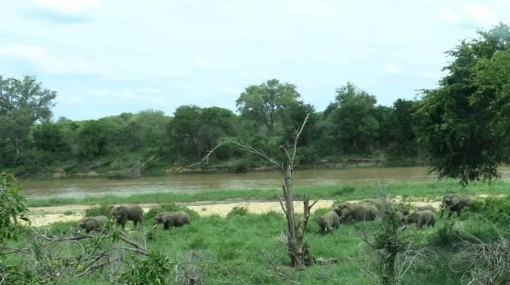 Im Krüger-Nationalpark ist die Gefahr, sich mit Malaria zu infizieren, zwischen Oktober und April hoch