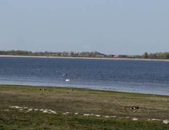 Zu den Gänsen gesellen sich am Gülper See weitere Wasservögel