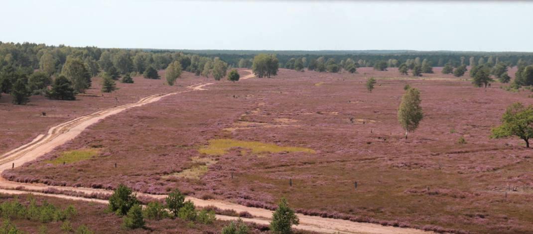Blick vom Aussichtsturm über die Kyritz-Ruppiner Heide