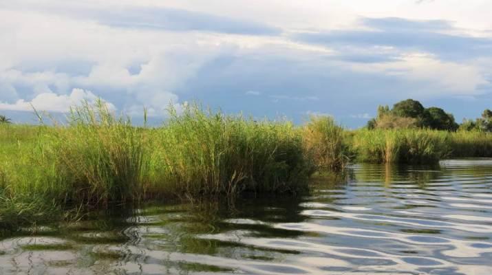 Sumpf im Okavangodelta