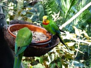 Gesundes Trockenfutter für Papageien und Sittiche
