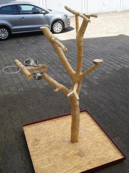 Papageienfreisitz selber bauen - So wird´s gemacht!