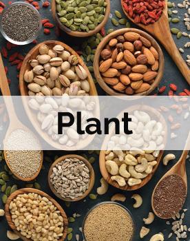 Papain Plant Processing