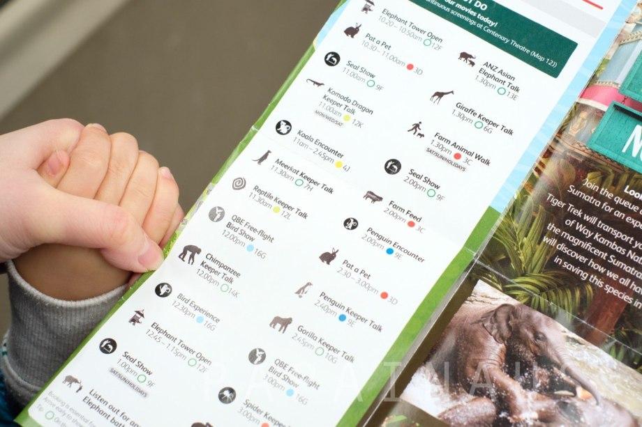 タロンガ動物園ショーの時間が書いてあるパンフレット