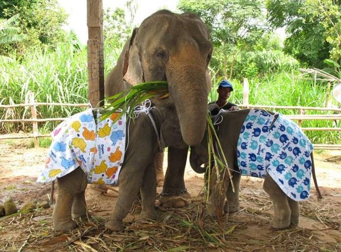 Elefanten in Windeln