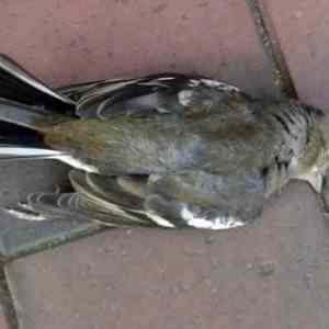 Suizid und der tote Vogelvater