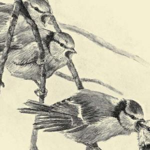 Ausschnitt Buchcover: Toller Buchtipp: Nestwärme - Was wir von Vögeln lernen können