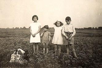 Juillet 1936 - Dans les champs : Jacqueline, Max, Nicole et Bernard LANDRIEU