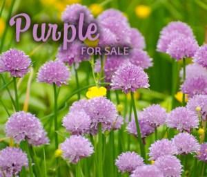 Purple Paparazzi Jewelry items for sale Album cover photo