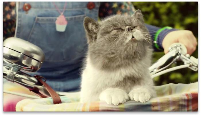 Sing It Kitty