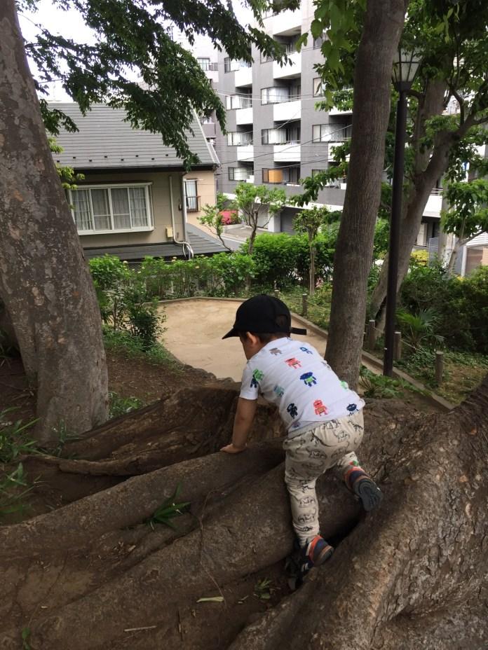 中根公園 木登り